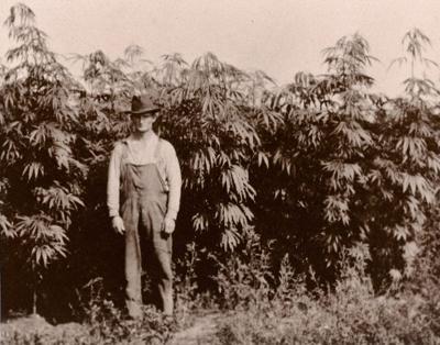 Hemp farmer
