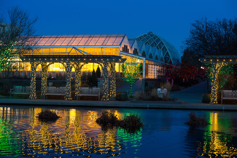 20161117_DenverBotanicBlossomsOfLight. Beautiful Light Displays Can Be  Seen At Blossoms Of Light At The Denver Botanic Gardens.