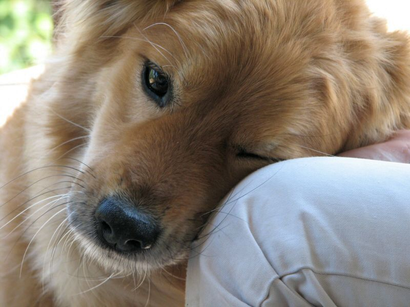 Pets offer more than love during pandemic