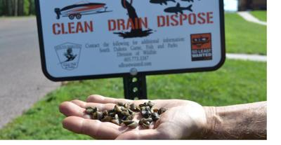 Zebra Mussels Found In Lake Yankton