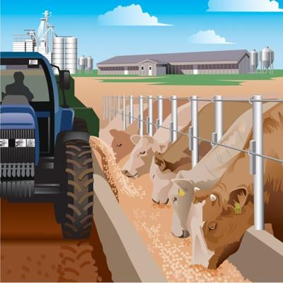 Neighbors: Low-Stress Processing For Feedyard Cattle