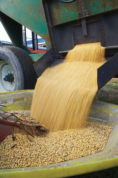 Grain Handling Safety: Priceless Practices