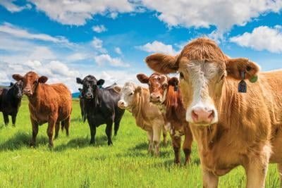 Neighbors: Pandemic Tips For Farmers, Ranchers