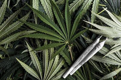 Bracing For Cannabis