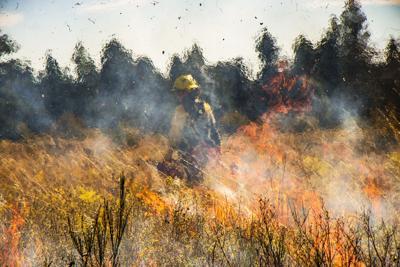 Prescribed Burns Ignite Across Western Washington