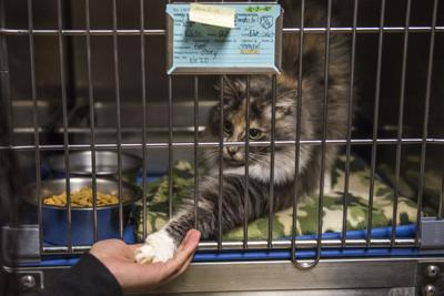 Lewis County Animal Shelter