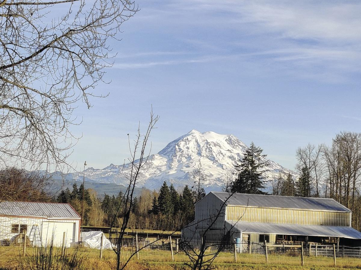 MtRainier View by wendy.jpg