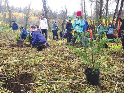 Students Plant About 1,500 Trees at Ohop Creek
