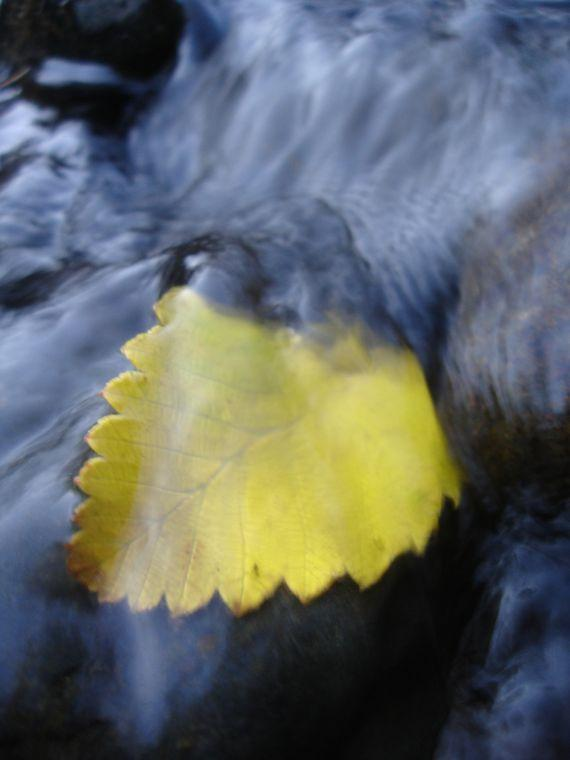 Nature Images 2mb: Nisqually Valley News: Nature Photos