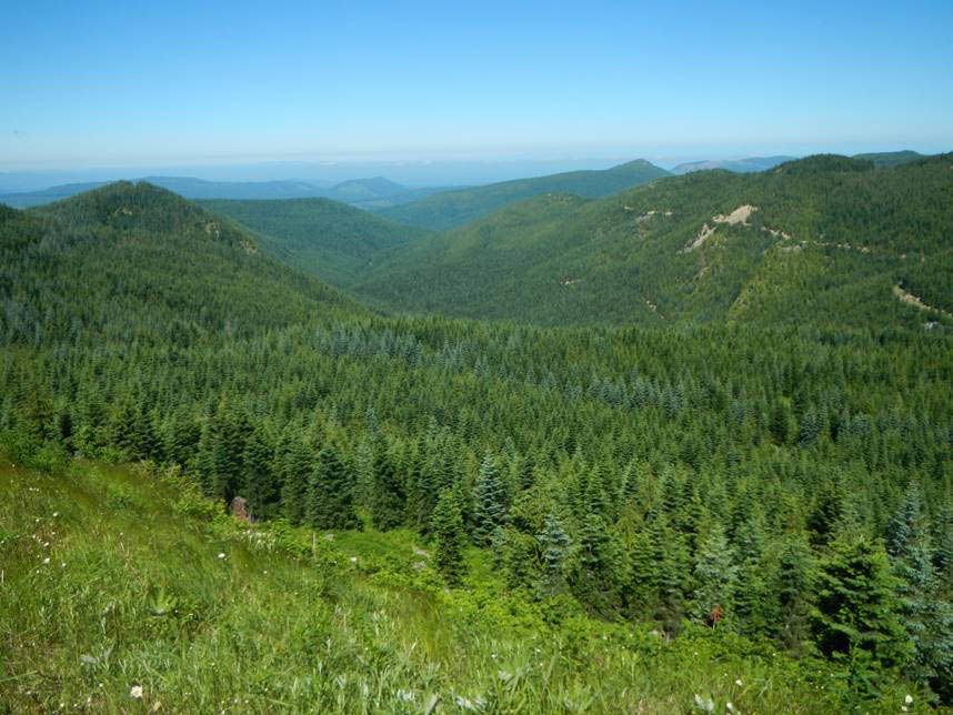 Nisqually Community Forest