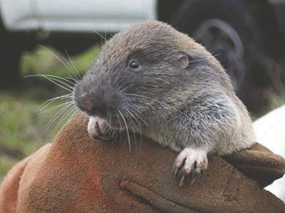 210325.news.pocket.gopher.jpg