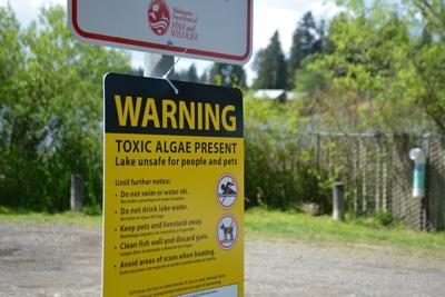 Toxic algae blooms are present