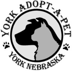 York Adopt-A-Pet will be CLOSED TO THE PUBLIC UNTIL FURTHER NOTICE