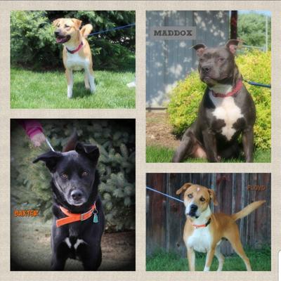 Doggo collage