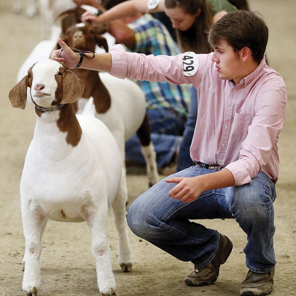 Goat industry has growth potential in Nebraska | Family