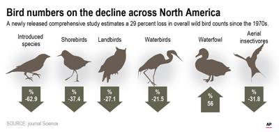 BILLIONS FEWER BIRDS