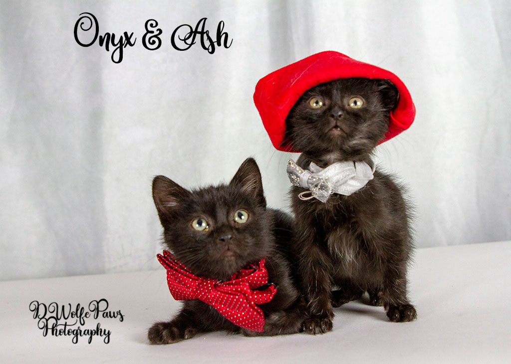 Onyx and Ash