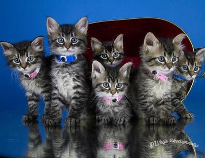 Kitten overload