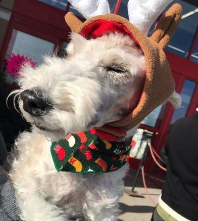 Precious reindeer doggo
