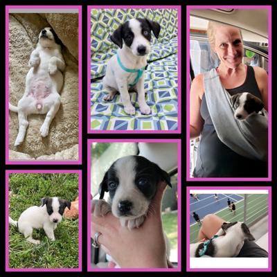 Puppy at Adopt A Pet