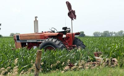 Area corn is on the up-and-up