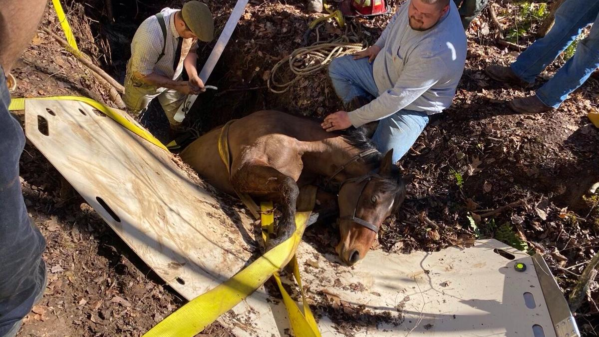 Large rescue team and animal control save horse in Halifax County