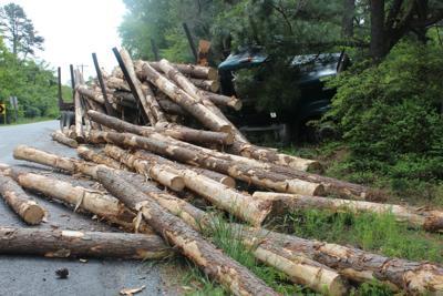 Logs in road.JPG