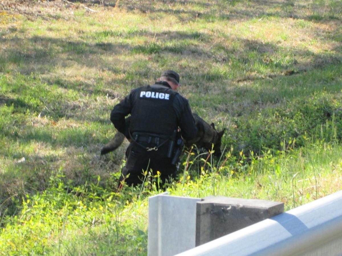Firearm search