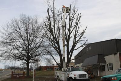 Rose Tree & Stump Removal